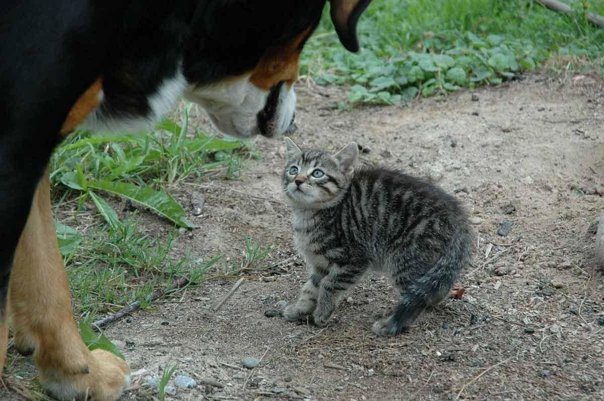 What causes Goosebumps – cat gets goosebumps