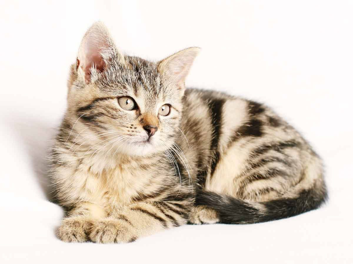 Benefits of owning a cat – What makes cats so special