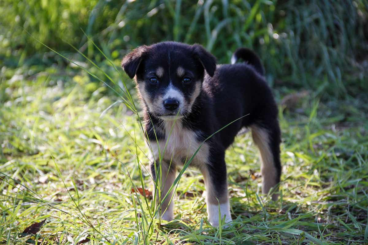 can't pet the puppies of Chernobyl