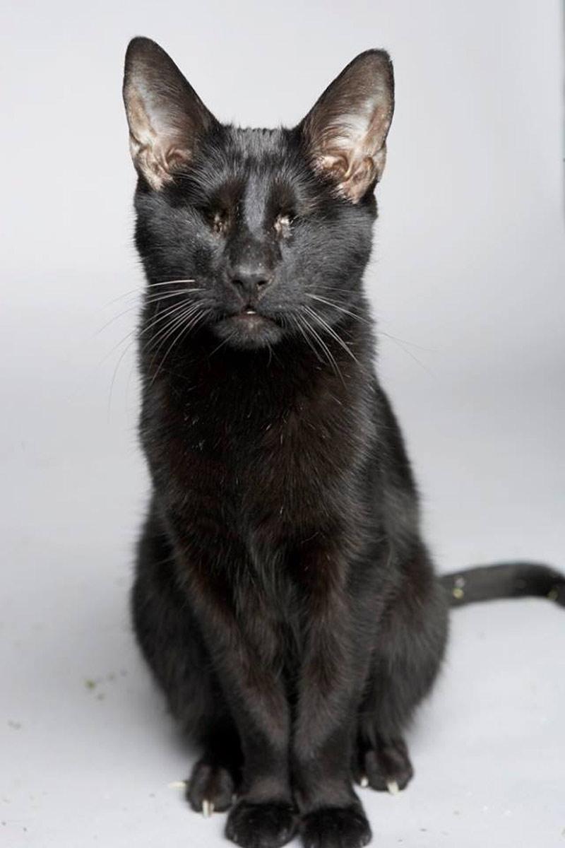 cat heroes - homer the blind cat