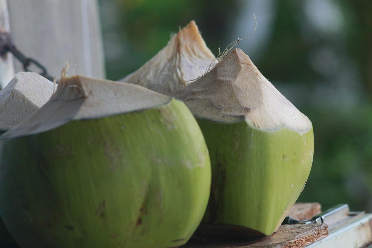 coconut oil unhealthy Polynesian diet