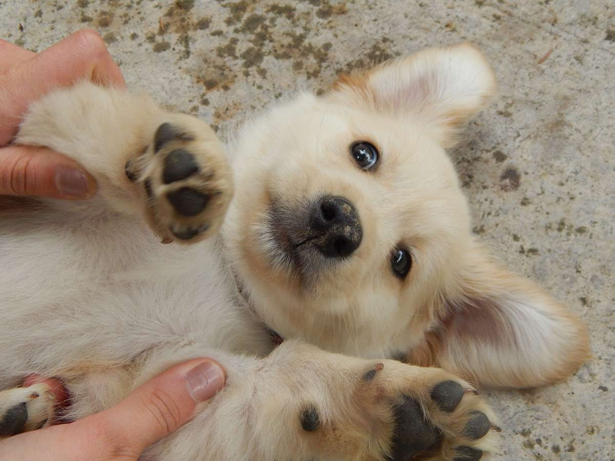 facts about puppies - adorable puppy
