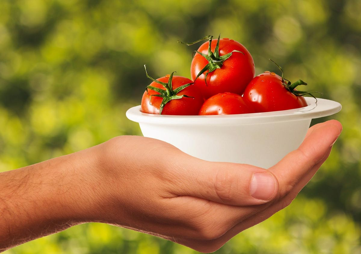 food facts - tomatoes poisonous